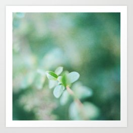 Leaves in summer Art Print