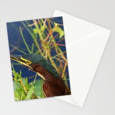 Green Heron Portrait Stationery Cards