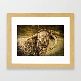Vintage Longhorn Cattle Framed Art Print