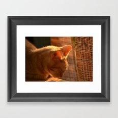 Resting Sunset Framed Art Print