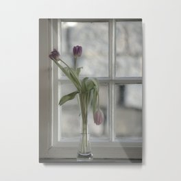 Droopy Tulip  Metal Print