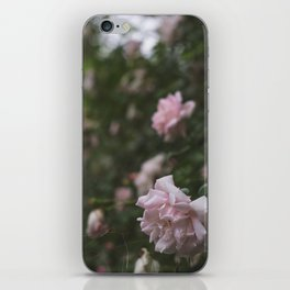 Pale Roses iPhone Skin