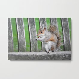 Squirrel Munchies Metal Print