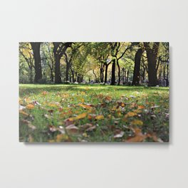 Leaves on Grass 2 Metal Print