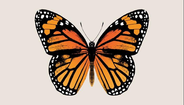 Monarch Butterfly | Vintage Butterfly | Kissenbezug