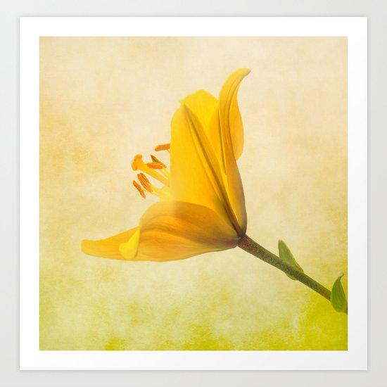 Lemon Lily Art Print