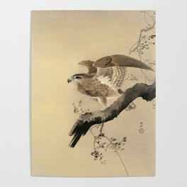 Hawk on the tree branch - Japanese vintage woodblock print Poster