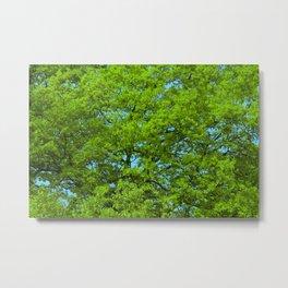 Green Oak Tree Foliage Metal Print
