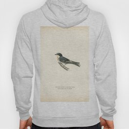 Hybrid between common house-martin and barn swallow (Chelidon rustica LxHirundo urbica) illustrated Hoody