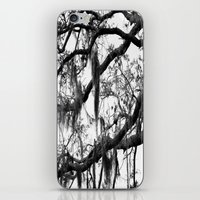 spanish iPhone & iPod Skins featuring Spanish Moss by MorganLoriPhoto