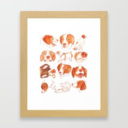 Faces and Poses of a Brittany Spaniel Framed Art Print