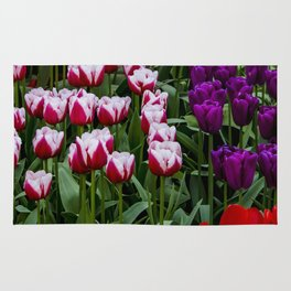 Field of Yellow, Purple, Red, and White and Red Stripe Tulips in Amsterdam, Netherlands Rug