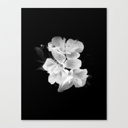 geranium in bw Canvas Print