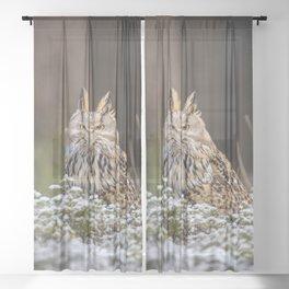 Western Siberian Owl Sheer Curtain