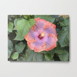 Hibiscus Creole lady Metal Print