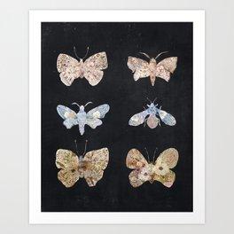 Floral Moths Art Print
