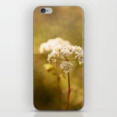 Golden Parsley iPhone & iPod Skin