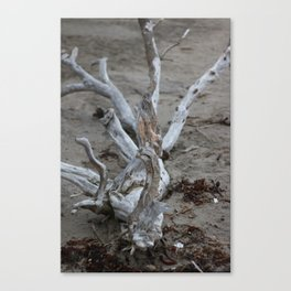 Moeraki Branches (1) Canvas Print