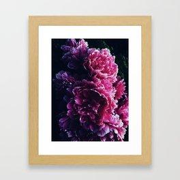 Peony Passion 3 Framed Art Print