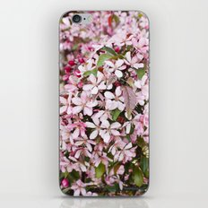 Apricot blossoms iPhone & iPod Skin