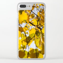 yellowed leaves of the linden tree Clear iPhone Case