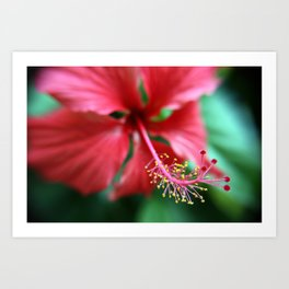 Jamaican Blossom Art Print