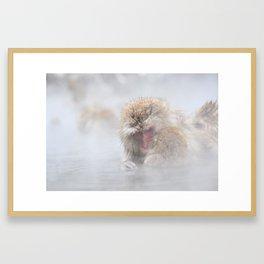 The Snow Monkeys of Jigokudani Yaen-Koen. Framed Art Print