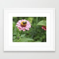 rileigh smirl Framed Art Prints featuring Flower and Bee by Rileigh Smirl
