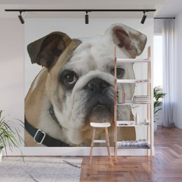 American Bulldog Background Removed Wall Mural