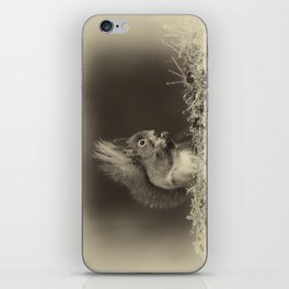 Red Squirrel iPhone Skin