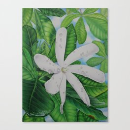 Tiare Tahiti Canvas Print
