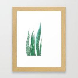 Sansevieria Framed Art Print