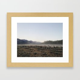 Sheep Dust Framed Art Print