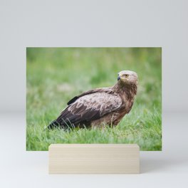 Lesser Spotted Eagle Mini Art Print