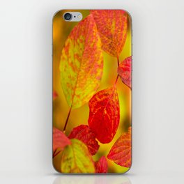 Red autumn leaves #decor #society6 iPhone Skin