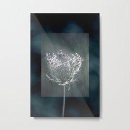 Lace in the Moonlight -- Botanical Daucus Carota Metal Print