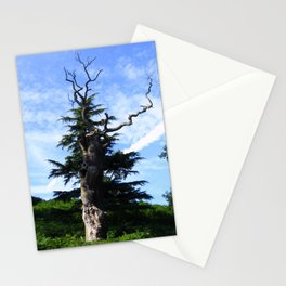 Twisted Tree Stationery Cards