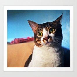 Cat where he Sat Art Print