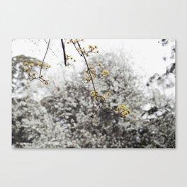 Winter Whites Canvas Print