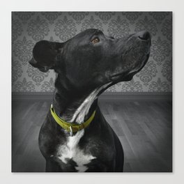 COBY (shelter pup) Canvas Print