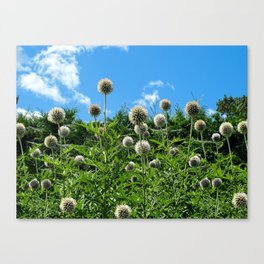 Fuzzy Pom Pom Flowers on a Grassy Hilly Slope on a Summer Day Canvas Print