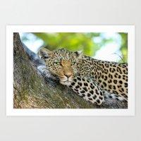 A Leopards Gaze 2 Art Print