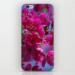 Rosy spring crabapple blossoms - Malus 'Prairifire' iPhone Skin