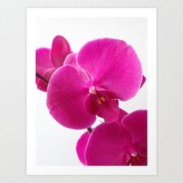 Pink orchid deco Art Print