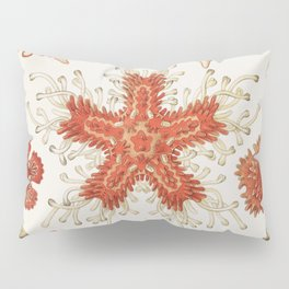 Asteridea illlustration lithograph by Adolf Glitsch after sketched by Ernst Haeckel shows starfishes in the phylum Echinodermata Pillow Sham