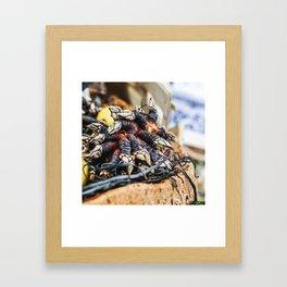 Percebes Framed Art Print