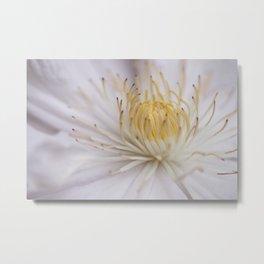 Yellow on White Minimalist Clematis Flower Metal Print