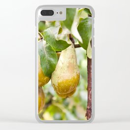 Pear tree ripe fruits cluster Clear iPhone Case