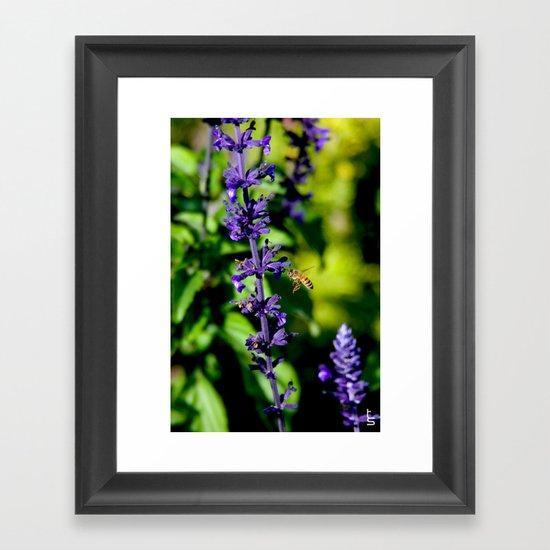 Purple Pollination Framed Art Print
