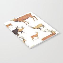 wild deers Notebook